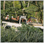 JEEP SAFARI EXCURSION ON BORA BORA